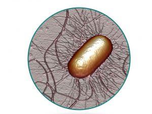 E.coli en círculo 87% imaxe